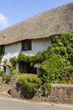 Videira na casa de campo do telhado da palha no Weir de Porlock, Somerset Imagem de Stock