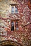 Videira que cresce ao longo do castelo de Hever Imagens de Stock