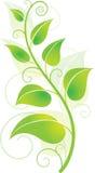 Videira verde Foto de Stock Royalty Free