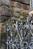 Videiras entrelaçadas na cerca do ferro fotos de stock royalty free