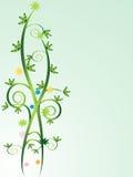 Videiras florais Fotografia de Stock Royalty Free