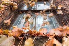 Videiras que crescem na construção abandonada imagens de stock
