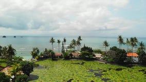 Video aereo del fuco di stordimento del lago e campo di Lotus su un'isola tropicale Bali, Indonesia Bella scena aerea dei loti stock footage