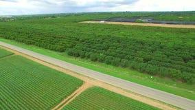 Video aereo di terreno coltivabile in fattoria Florida video d archivio