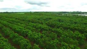 Video aereo di terreno coltivabile in fattoria Florida stock footage