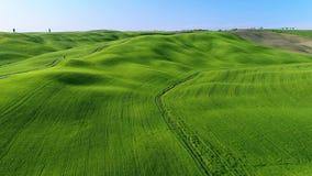 Video aereo 4K della Toscana su tempo di molla con i campi verdi stock footage