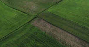Video aereo - volo del fuco sopra i campi verdi sulla campagna - estate in Polonia 2019 stock footage