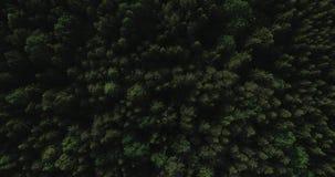Video aereo - volo del fuco sopra la grande foresta verde in Polonia, parco nazionale, estate 2019 stock footage