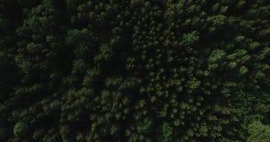 Video aereo - volo del fuco sopra la grande foresta verde in Polonia, parco nazionale, estate 2019 video d archivio