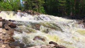 Video al rallentatore di piccola cascata nella foresta boreale profonda archivi video