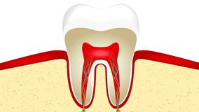 Video animation of crop of tooth stock video footage