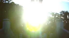 Video ascending stairs and a large tree with. Sunlight in sky. Lense flare effect stock video