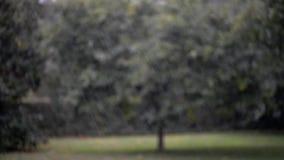 Video av att falla för regn lager videofilmer