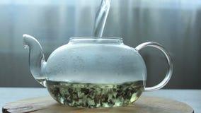 Video av processen av att brygga grönt kinesiskt te i en glass tekanna arkivfilmer