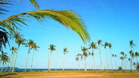 Video av sidor för en kokosnöt som svänger inrama en rad av kokospalmer stock video