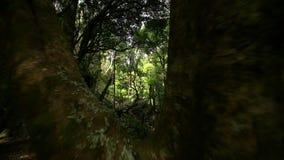 Backwards tracking shot through trees. Video of backwards tracking shot through trees stock video