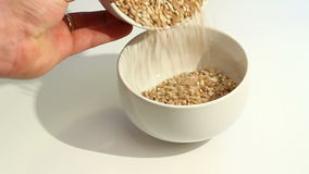 Video of barley grains Stock Photo
