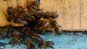 Video of bee hive Royalty Free Stock Photo