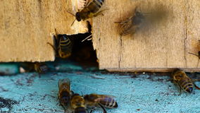Video of bee hive Stock Image