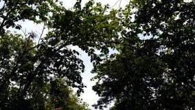 Video bij Midden van Bos stock videobeelden