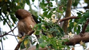 A bird sitting on a tree branch. Video of A bird sitting on a tree branch stock video footage