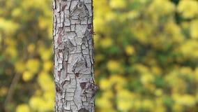 Blue tit bird tree trunk feeding. Video of blue tit bird tree trunk feeding stock video