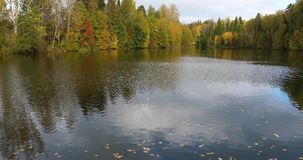 Lake surrounded by Autumn forest. Video of breeze blowing over the surface of a lake creating gentle ripples with surrounding forest colored by gold and orange stock footage