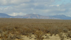 The video of bushy desert area. In desertness with tumbleweeds, massive mountains on the background and the cloudy sky stock video