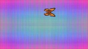 Video Butterfly Vanessa atalanta rainbow checkered background. Video Animation of illustration seamless loop Butterfly inachis io rainbow checkered background stock footage
