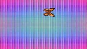 Video Butterfly Vanessa atalanta rainbow checkered background stock footage