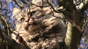Cat on a tree on a sunny day. Video of cat on a tree on a sunny day stock video footage