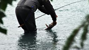 Catch and release fishing stock video