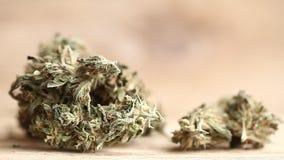 Cannabis business concept . Medical Marijuana seeds hemp stock video