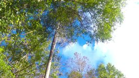 VIDEO OF CLOUDS MOVING ABOVE THE TREES stock footage