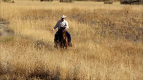 A video of a cowboy riding his horse at a lope in a meadow of golden grass. A cowboy galloping on his horse his horse through a meadow stock video