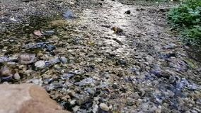 Macro close up stream of clean water stock video footage