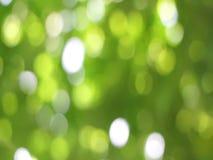 video del ฺBokeh dalla luce della natura sotto l'albero video d archivio