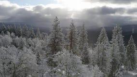Video del tempo HD di inverno dell'Oregon stock footage