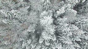 video della compilazione 4K Foresta congelata di cui sopra sul Nord, vista aerea di inverno di volo stock footage