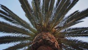 Video delle palme dell'albero nel moto con stabilizzazione elettronica nel parco di Barcellona archivi video