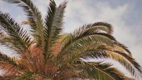 Video delle palme dell'albero nel moto con stabilizzazione elettronica nel parco di Barcellona video d archivio