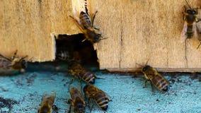 Video des Bienenbienenstocks stock video