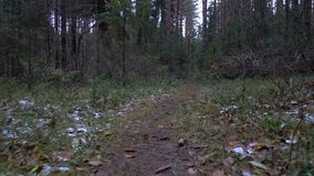 Video des gefallenen Baums auf der Bahn stock footage