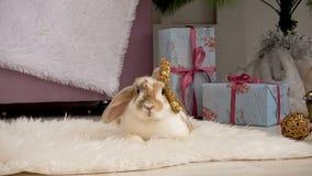 Video di coniglio beige di menzogne sveglio che riposa nello studio video d archivio