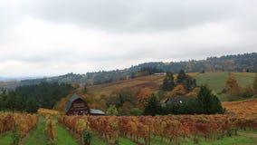 Video di cottura delle vigne a Dundee Oregon durante la stagione di caduta variopinta 1080p HD archivi video