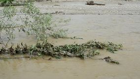 Flowing river after a stormy rain stock footage
