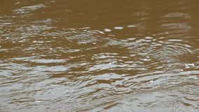 Video of dirty water stock footage