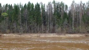 Video of dirty water in forest stock video footage