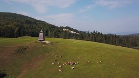 Drone flies over cows near a watchtower in 4K stock video