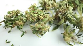 Video dry marijuana buds medical cannabis product
